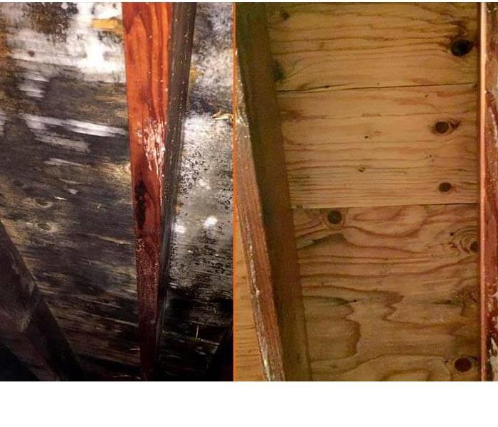 mold remediation in elkhart After